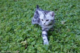 Foto 2 Wir erwarten Kitten