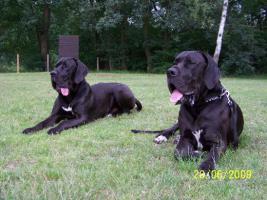 Foto 3 Wir erwarten Mitte - April 2012 Welpen in den Farben: Schwarz & Blau !