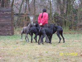 Foto 10 Wir erwarten Mitte - April 2012 Welpen in den Farben: Schwarz & Blau !