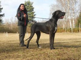 Foto 23 Wir erwarten Mitte - April 2012 Welpen in den Farben: Schwarz & Blau !