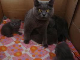 Foto 4 Wir haben BKH-Babys