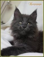 Wir haben Kitten aus liebevoller Hobbyzucht