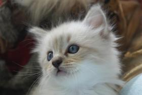 Wir haben wieder wunderschöne Kitten