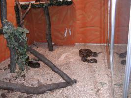 Wir nehmen Ihre Reptilien kostenlos auf !!!!!