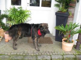Wir suchen eine Betreuung für unseren Hund in den sommerferien