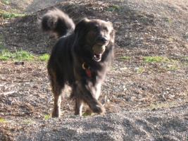 Foto 2 Wir suchen eine Betreuung für unseren Hund in den sommerferien