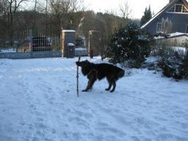 Foto 3 Wir suchen eine Betreuung für unseren Hund in den sommerferien