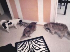 Foto 2 Wir suchen eine liebevolle Familie für Moritz!