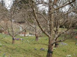Foto 3 Wochenendgrundstück in Aichwald/Aichelberg