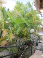 Foto 3 Wohnhaus in der Caribic