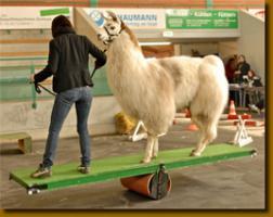 Foto 3 Wolly-Lamas