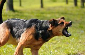 Workshop Korpersprache Hund