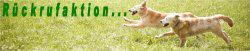 Workshops m.Hund für alles die mit Hunden arbeiten, Gassigeher, Tierheimmitarbeiter, Tierschutzvereine, Hundepensionsmitarbeiter, Hundetrainer die über den Tellerrand hinausschauen möchten und eine andere Sichtweise der Hundeerziehung kennenlernen wollen!NEU!
