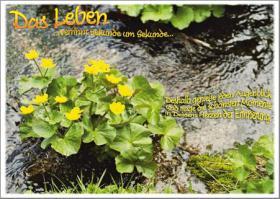Foto 39 Wunderschöne Grußkarten Grüße & Liebesgrußkarten online bei Bildgedanken.com