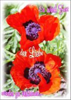 Foto 55 Wunderschöne Grußkarten Grüße & Liebesgrußkarten online bei Bildgedanken.com