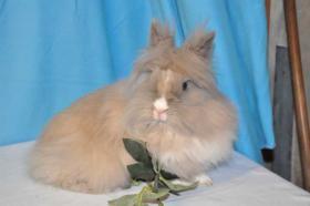 Wunderschöne Kaninchendame