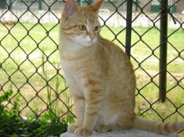 Wunderschöne Katzen suchen ein Zuhause