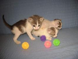 Foto 6 Wunderschöne Katzenkinder suchen ein Zuhause