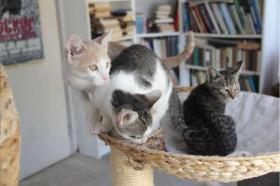 Foto 3 Wunderschöne Stubentiger suchen ein Zuhause