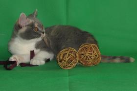 Foto 4 Wunderschöne und verschmuste Glücks-Katze