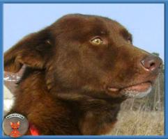 Wunderschöner Samuel sucht hundeerfahrene Menschen