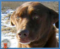 Foto 2 Wunderschöner Samuel sucht hundeerfahrene Menschen
