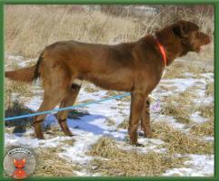 Foto 3 Wunderschöner Samuel sucht hundeerfahrene Menschen