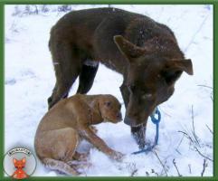 Foto 5 Wunderschöner Samuel sucht hundeerfahrene Menschen