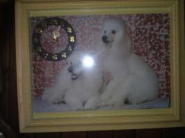 Wunderschönes Bild mit Hunden mit Uhr