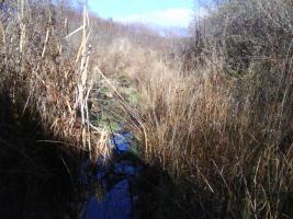 Foto 6 Wunderschönes Grundstück