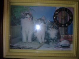 Wunderschönes Katzbild mit Uhr