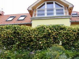 Foto 2 Wunderschönes Zweifamilienhaus in Ungarn zu verkaufen