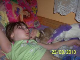 Foto 2 Wundervolle Chihuahuadame aus Liebhaberzucht