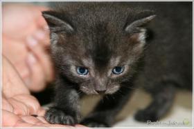 Foto 2 Wundervolle Kätzchen möchten dich glücklich machen