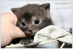 Foto 3 Wundervolle Kätzchen möchten dich glücklich machen