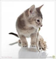 Foto 4 Wundervolle Kätzchen möchten dich glücklich machen