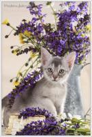 Foto 6 Wundervolle Kätzchen möchten dich glücklich machen
