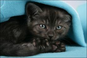 Foto 7 Wundervolle Kätzchen möchten dich glücklich machen