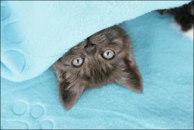 Foto 8 Wundervolle Kätzchen möchten dich glücklich machen