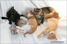 Wundervolle Katzenkinder möchten dich glücklich machen :)
