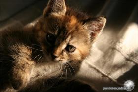 Foto 4 Wundervolle Katzenkinder möchten dich glücklich machen :)