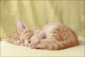 Foto 9 Wundervolle Katzenkinder möchten dich glücklich machen :)