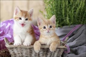 Foto 10 Wundervolle Katzenkinder möchten dich glücklich machen :)