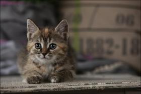 Foto 11 Wundervolle Katzenkinder möchten dich glücklich machen :)