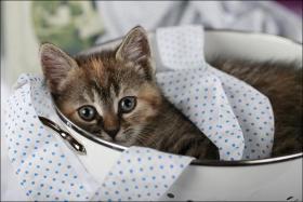Foto 12 Wundervolle Katzenkinder möchten dich glücklich machen :)