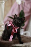 Foto 13 Wundervolle Katzenkinder möchten dich glücklich machen :)