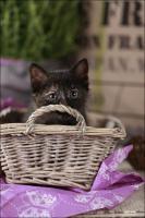 Foto 14 Wundervolle Katzenkinder möchten dich glücklich machen :)