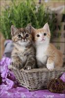 Foto 15 Wundervolle Katzenkinder möchten dich glücklich machen :)