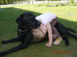 Foto 2 Wurfankündigung Labrador Welpen
