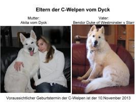 Wurferwartung Weiße Schäferhund-Welpen vom Dyck